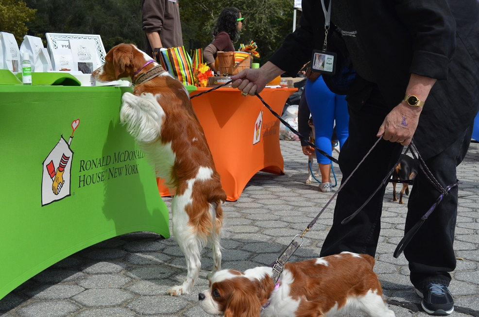 free events for dogs in nyc incluing angel on a leash in carl schurz park
