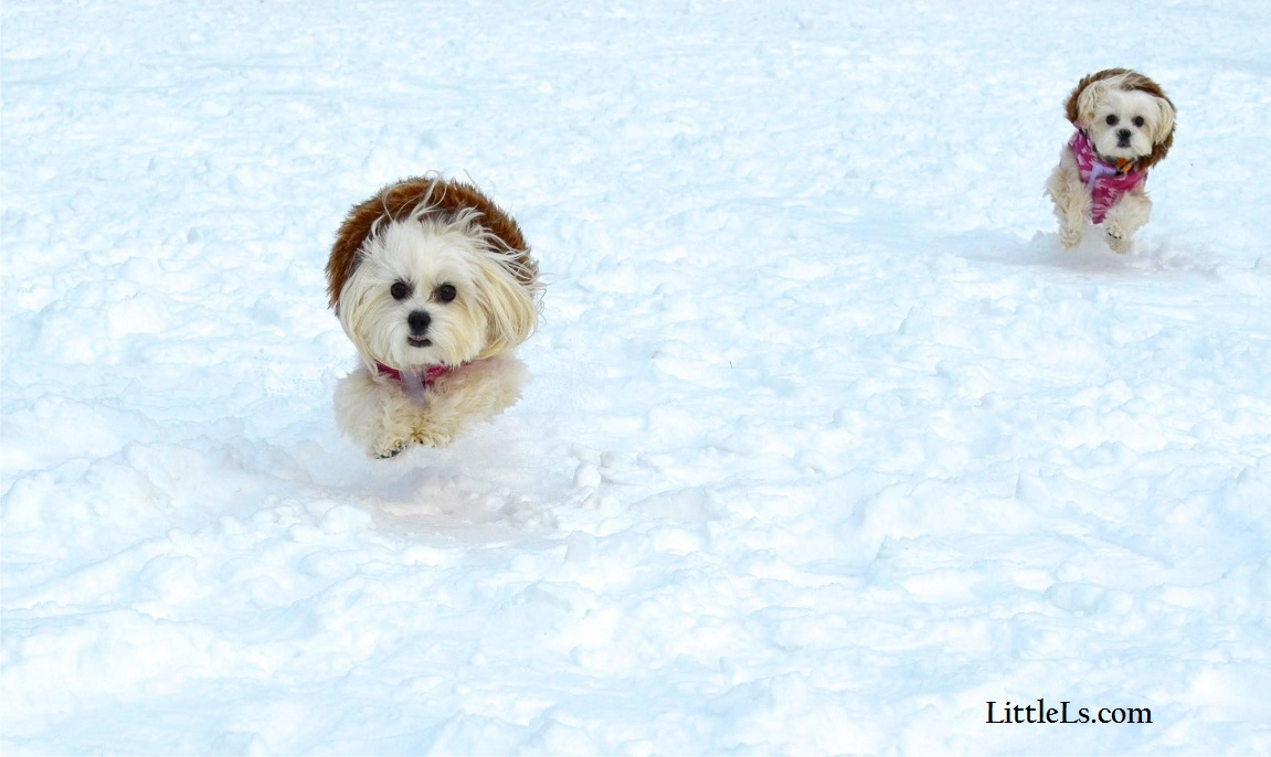 best dog winter coats warm snow jackets for dogs