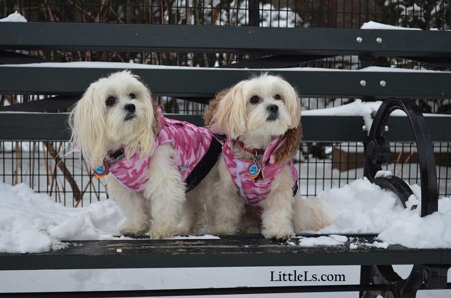 dog parkas stylish warm coats for dogs