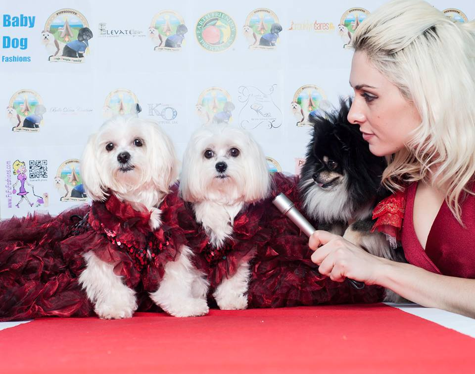 dog oscars and oscar party for pups