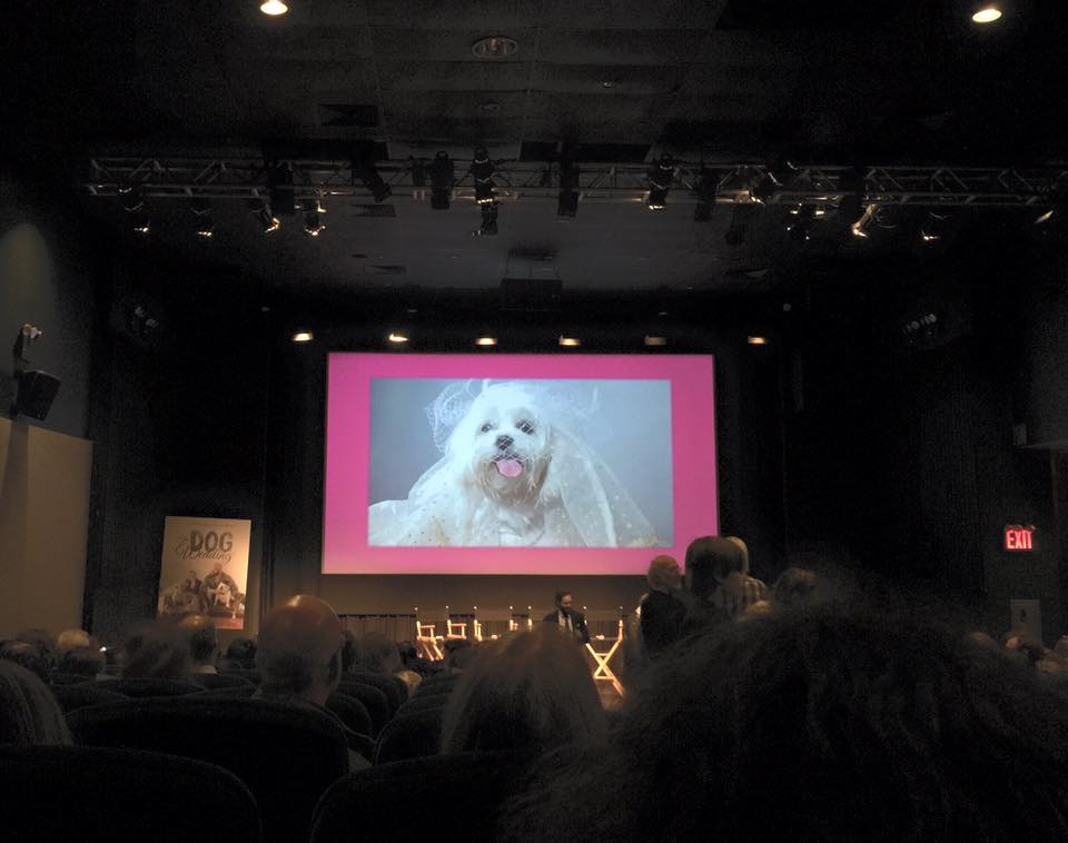 lulu from littlels dog models dog wedding movie premiere