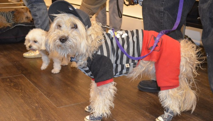 NY Yankee dog is one of the famous new york city dogs and a real celebrity dog