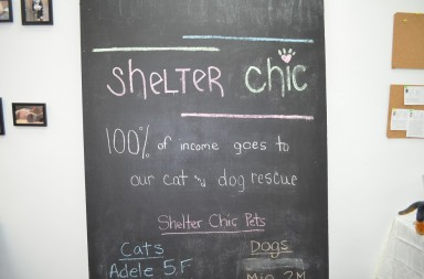 chelter chic is one of the nonprofit pet boutiques in usa