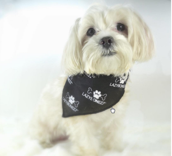 designer bandanas for dogs get free
