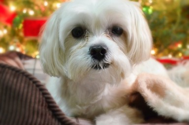 dog poetry poems about christmas and dogs