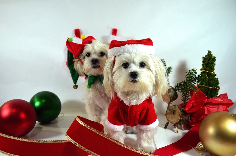 xmas stocking stuffers for dogs