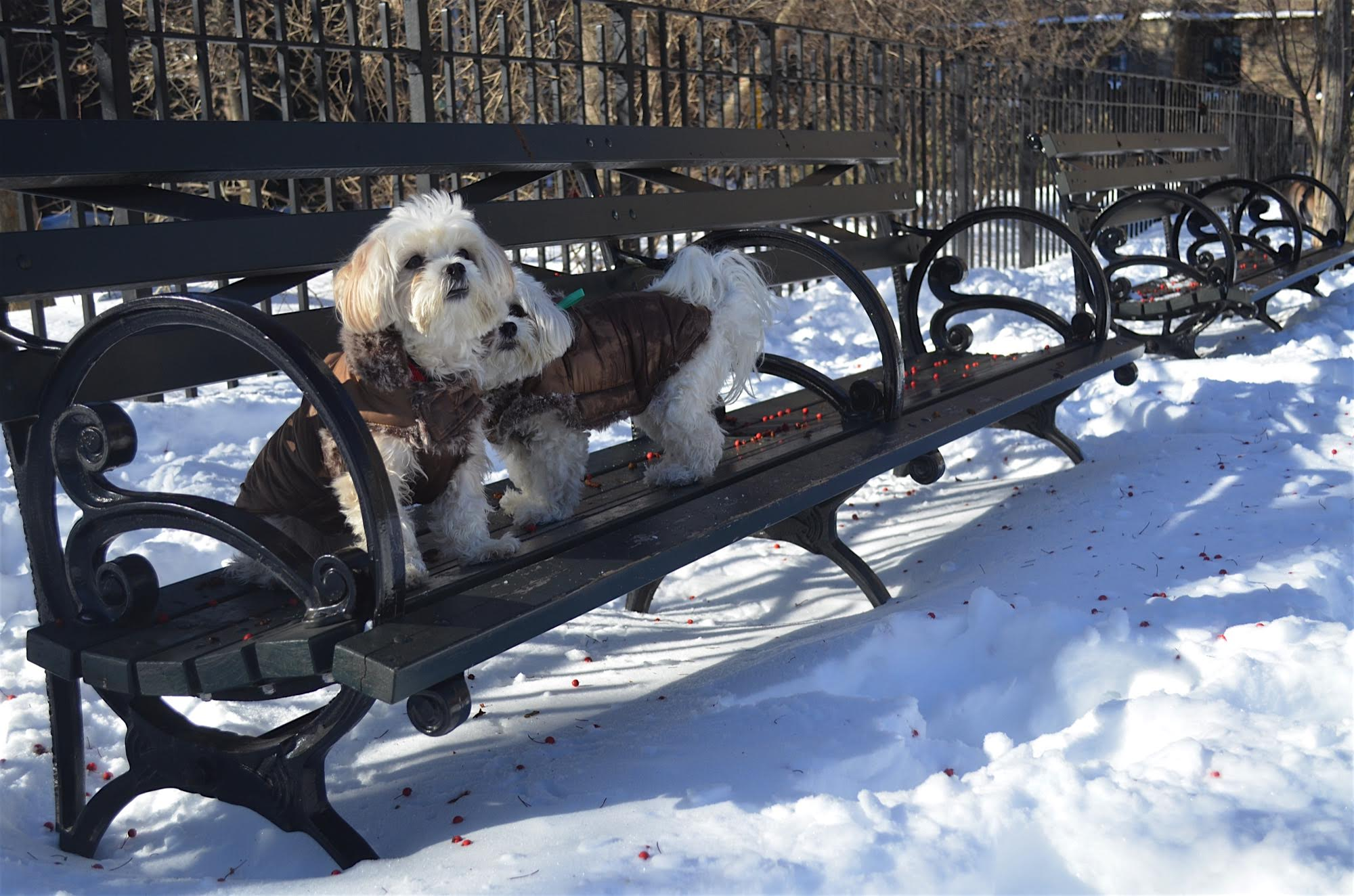 best nyc dog parks in the winter