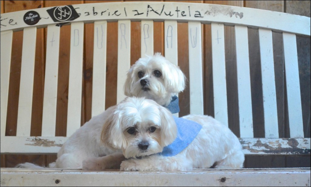 dogy models lilly and lulu wearing snap-on dog bandanas mountain style by little bear dog apparel company