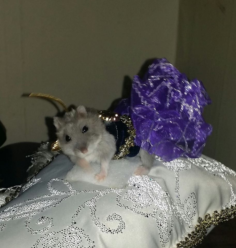 designer dresses for hamsters and other rodents