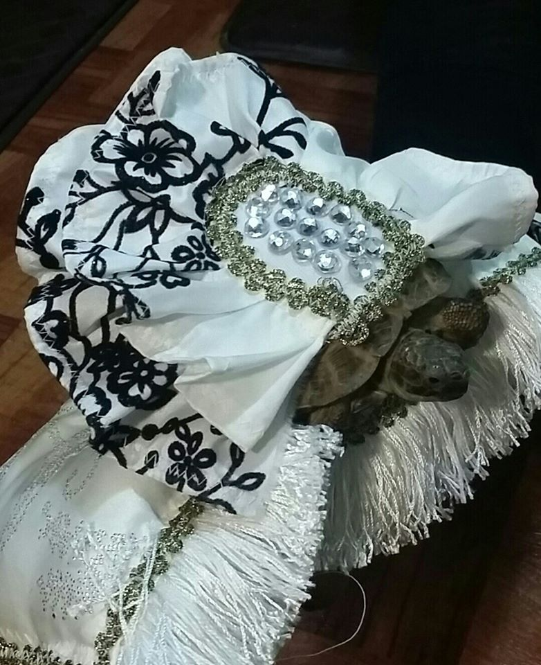 designer dresses and clothes for reptiles turtles and iguanas