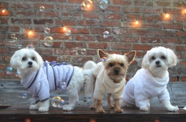 bath robes for dogs by little bear company nyc