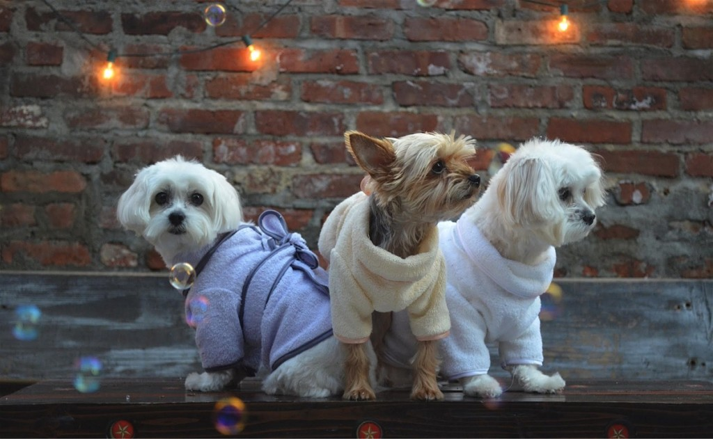 absorbent clothes for dogs by little bear dog apparel