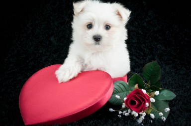 valentine gifts for dogs littlels dog treats promotion