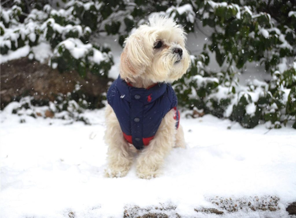 designer winter dog coats