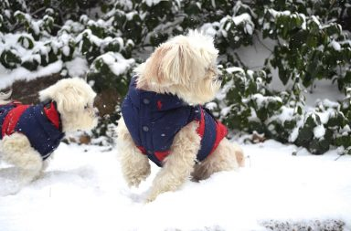 luxury winter dog coats for new york city dogs