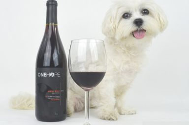 best wines for dog charities
