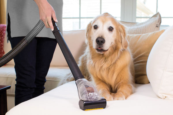 Multi Dog Home Cleaning Guide (Guest Post) - Little Bites