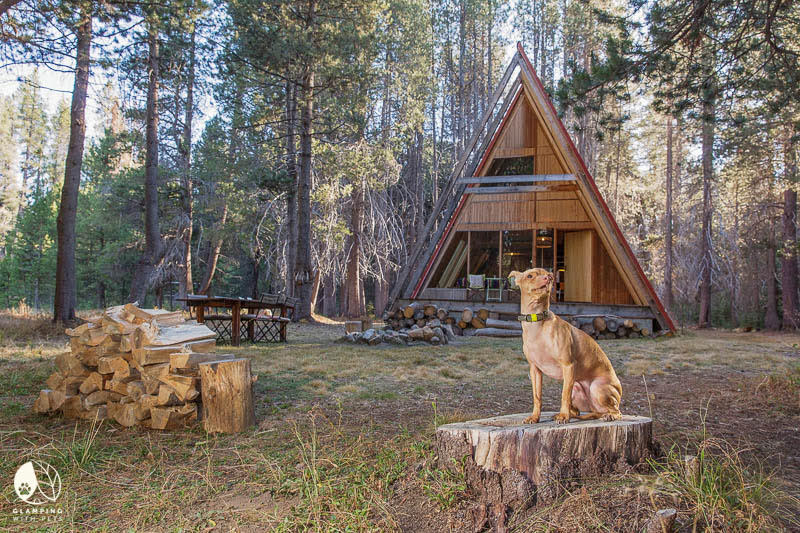 luxury dog getaways in california