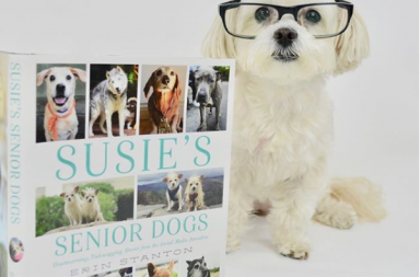 our reaction and review of Susie's senior dogs book