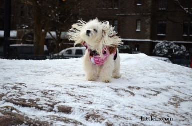 best warm winter coats for dogs snow