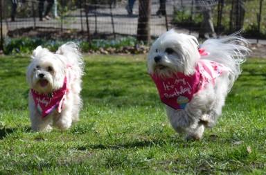 celebrating dog birthday in central park nyc