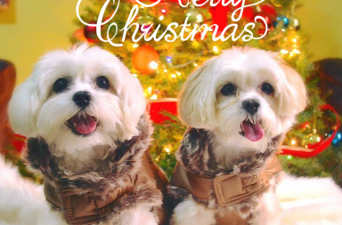 xmas gifts for dogs and dog owners