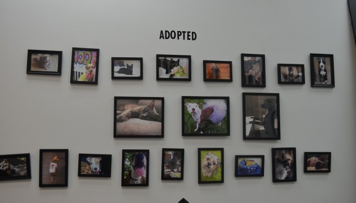 this nyc store helps to find home for homeless dogs