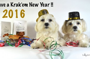best dog blogs and best new dog treats in 2016
