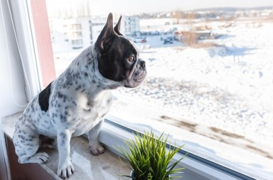 best apartment and indoor games for dogs for rainy and snow days