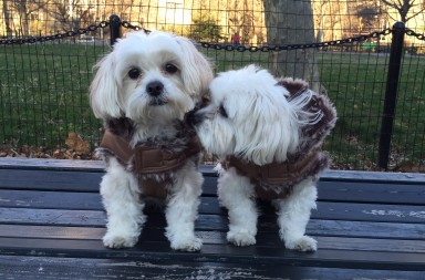 nyc dogs winter coats