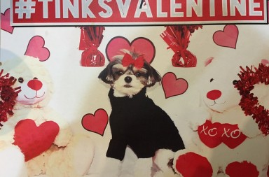 nyc famous celebrity dogs like Tinkebell often hold parties for their doggy friends