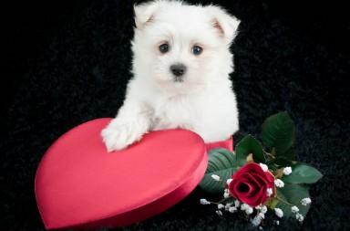 valentine gifts for dogs littlels dog treats promotion