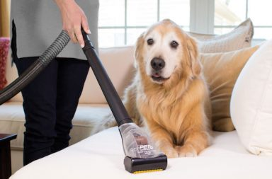 keeping house clean with multiple dogs
