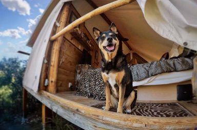 glamourous pet friendly getaways with glamping with pets